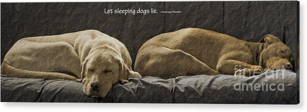 Sleeping Dogs Acrylic Print featuring the photograph Let Sleeping Dogs Lie by Gwyn Newcombe