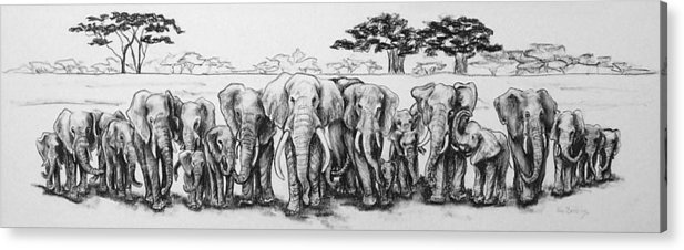Elephants Acrylic Print featuring the drawing Following The Matriarch by Ann Beeching