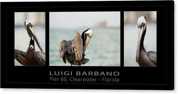 Pelican Acrylic Print featuring the photograph Pier 60 Number 1 by Luigi Barbano BARBANO LLC