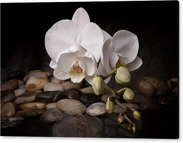 Orchid - Sensuous Virtue by Tom Mc Nemar