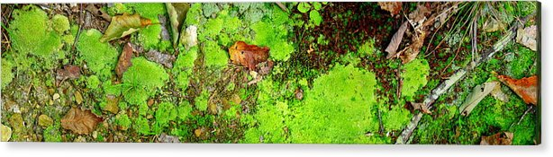 Moss Acrylic Print featuring the photograph Kate Moss by Edward Smith