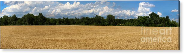 Wheat Acrylic Print featuring the photograph Kansas Wheat Field 5a by Gary Gingrich Galleries