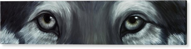 Eyes Acrylic Print featuring the painting Gray Wolf Eyes by Darlene Green