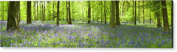 Scenics Acrylic Print featuring the photograph Wonderful Woodland by Pkfawcett