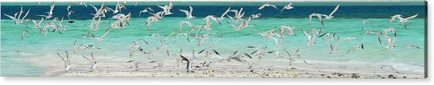 Scenics Acrylic Print featuring the photograph Flock Of Seagulls By Azure Beach by Christopher Leggett
