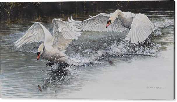 Swans in Dispute by Alan M Hunt