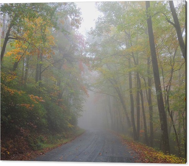 Autumn Acrylic Print featuring the photograph A Foggy Drive by Judy Waller