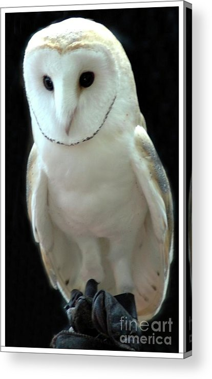 Barn Acrylic Print featuring the photograph Barn Owl. by Kathleen Struckle