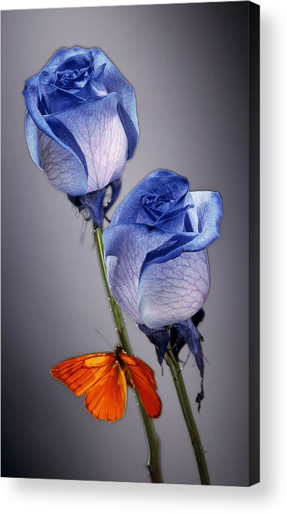 Cobalt Acrylic Print featuring the photograph Rosa Azul With Orange by Kirk Ellison