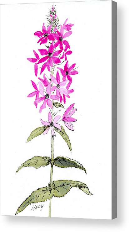 Flowers Acrylic Print featuring the painting Fireweed by Linda Palmer