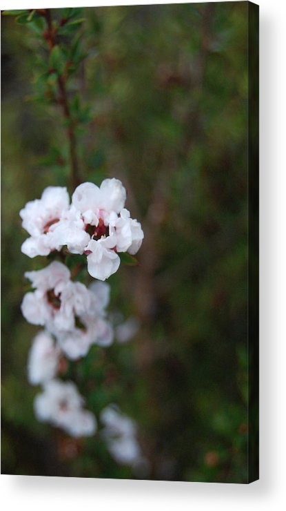 White Acrylic Print featuring the photograph White Floral On Green by Jean Booth
