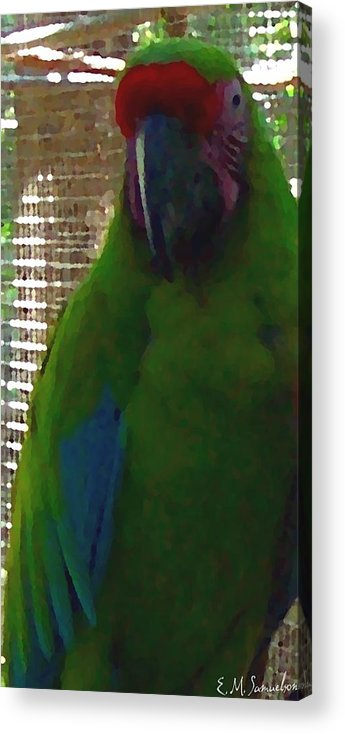 Parrot Acrylic Print featuring the photograph Green Parrot by Elise Samuelson