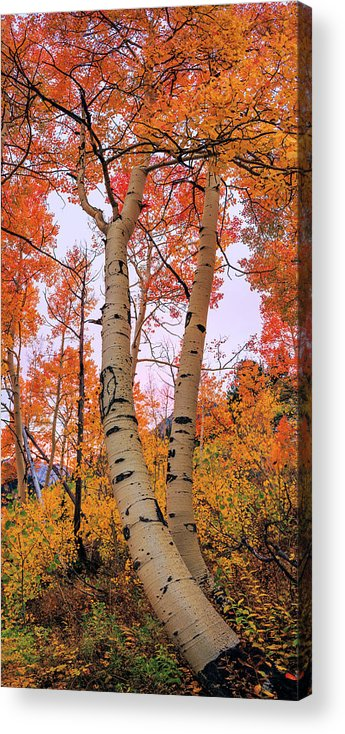 Moments Of Fall Acrylic Print featuring the photograph Moments Of Fall by Chad Dutson