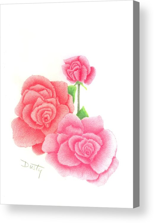 Rose Acrylic Print featuring the drawing Trio Of Red Roses by Dusty Reed