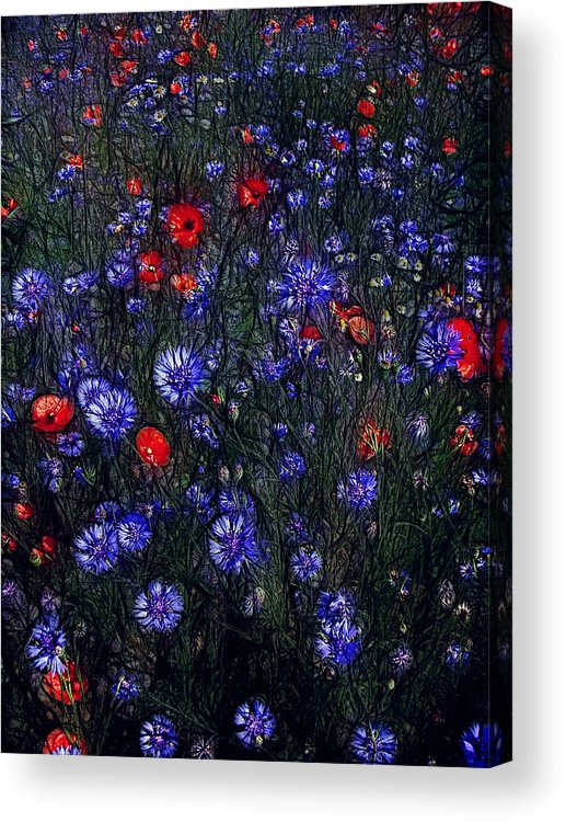 Nature Acrylic Print featuring the photograph A Midsummer Night's Dream by Joachim G Pinkawa