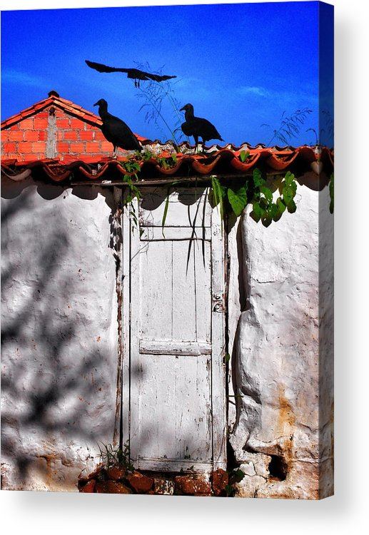 Amigos Negros Acrylic Print featuring the photograph Amigos Negros by Skip Hunt