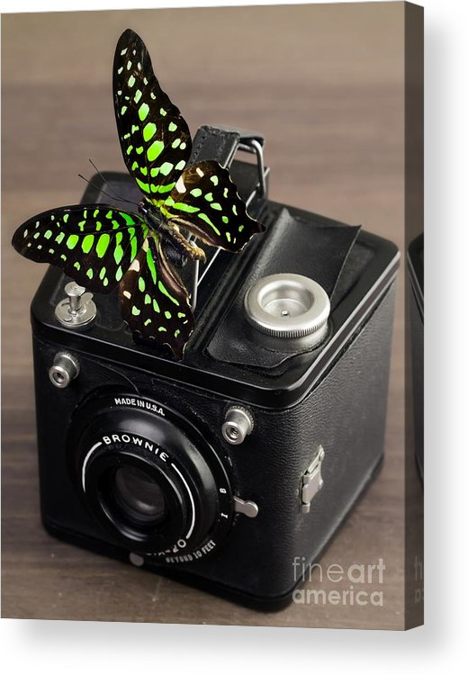 Butterfly Acrylic Print featuring the photograph Beautiful Butterfly On A Kodak Brownie Camera by Edward Fielding