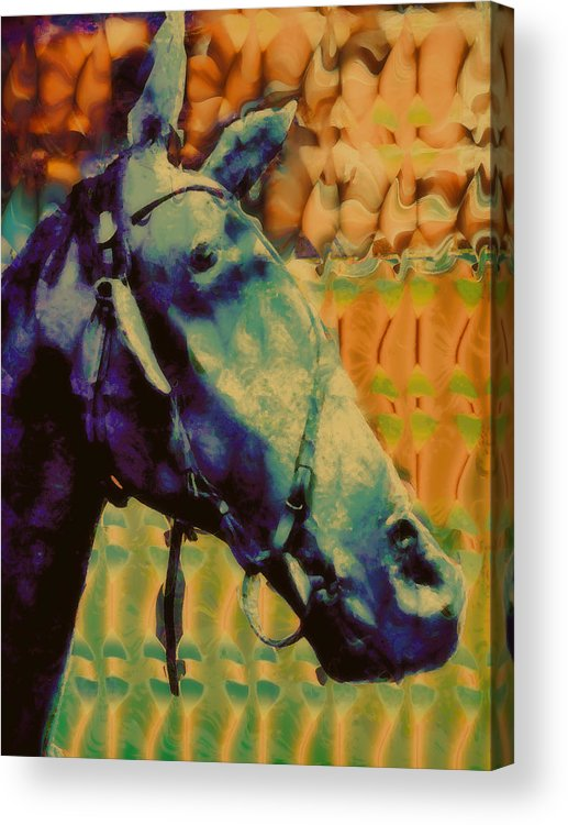 Horse Portrait Acrylic Print featuring the digital art Billy Blue by Devalyn Marshall