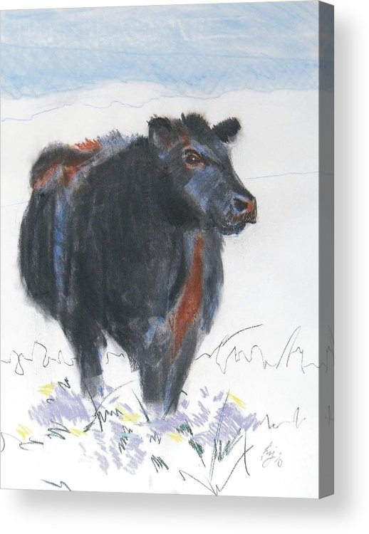 Mike Jory Cow Acrylic Print featuring the painting Black Cow Drawing by Mike Jory