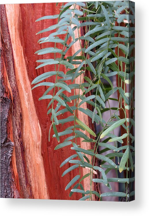 Tree Acrylic Print featuring the photograph Branches And Bark by Laurel Powell