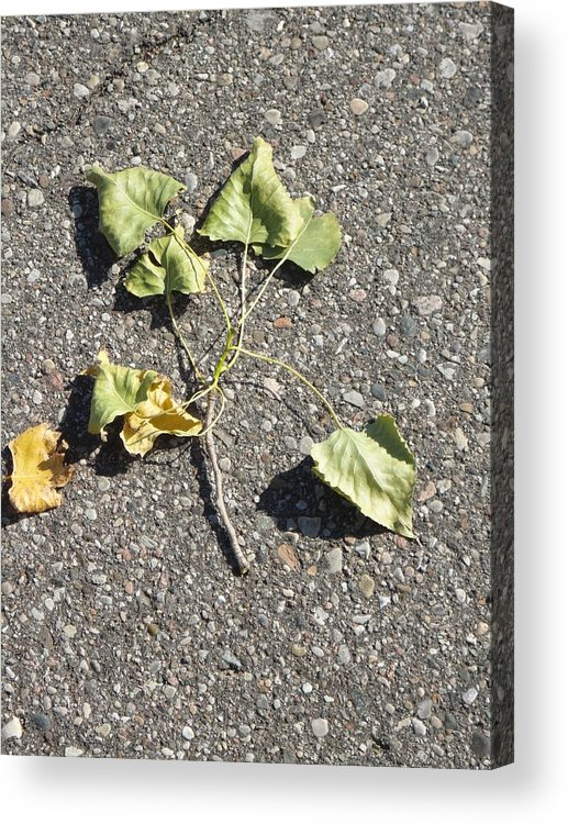 Guy Ricketts Photography And Art Acrylic Print featuring the photograph Brotherhood Of Leaves by Guy Ricketts