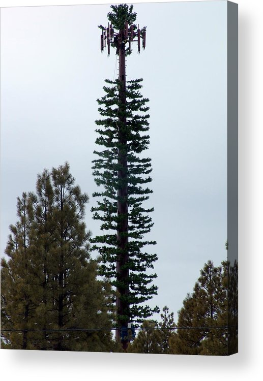 Cell Tower Acrylic Print featuring the photograph Cell Tower Camouflage by Jeri lyn Chevalier