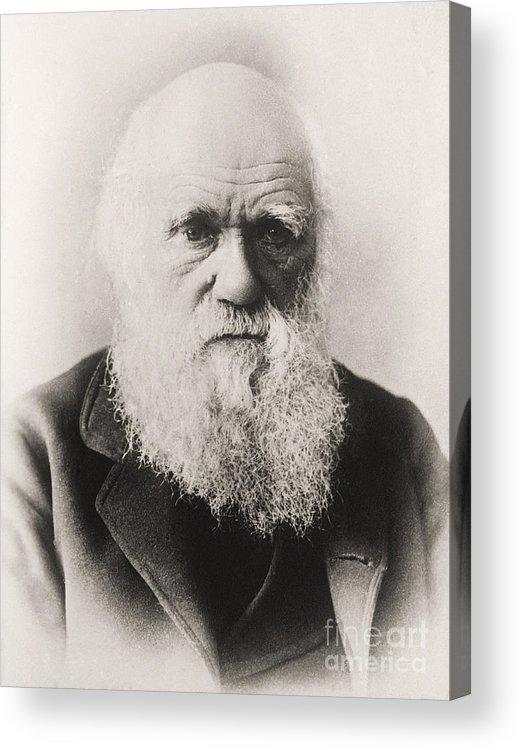 Beard Acrylic Print featuring the photograph Charles Darwin by English School