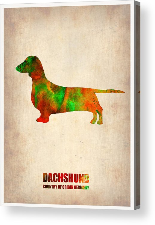 Dachshund Acrylic Print featuring the painting Dachshund Poster 2 by Naxart Studio