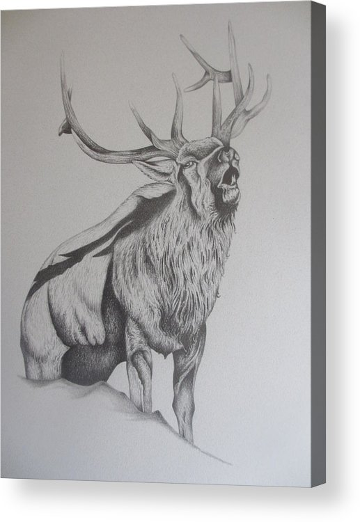 Mountain Elk Acrylic Print featuring the drawing Elk by Pete Garcia