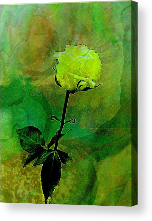 Rose Acrylic Print featuring the photograph Enduring Yellow Rose by Shirley Sirois