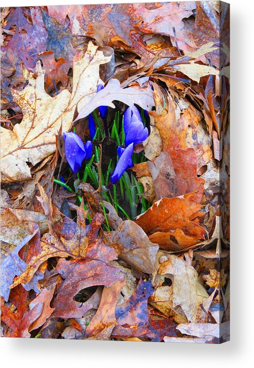 Flower Acrylic Print featuring the photograph Fighting To Grow by Darryl Kravitz