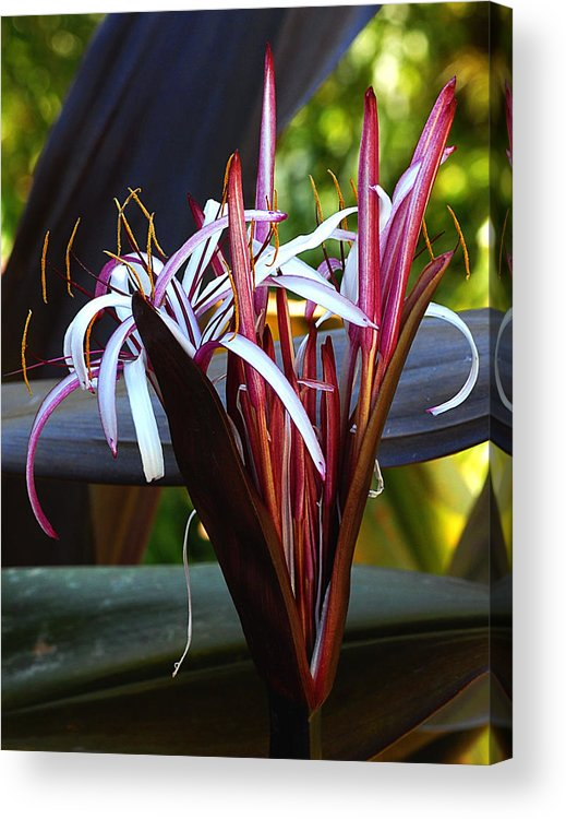 Flowers Acrylic Print featuring the photograph Unknown Flower by Steve Archbold