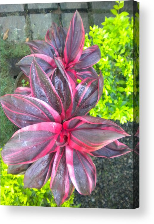 Dhruv Acrylic Print featuring the photograph Flower by Dhruv Avdhesh