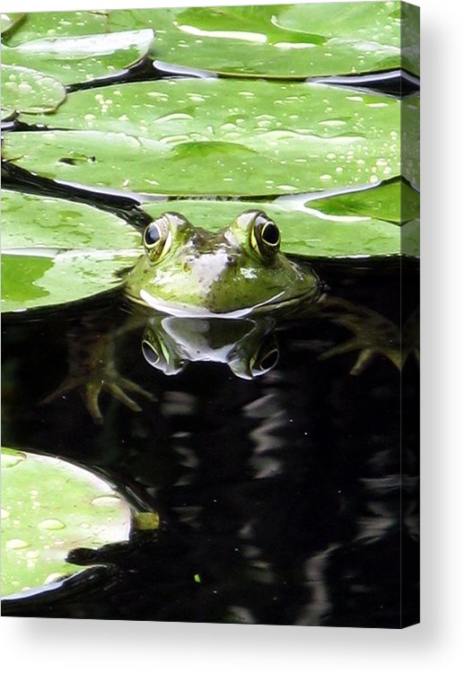Frog Acrylic Print featuring the photograph Four Eyed Frog by Darryl Kravitz