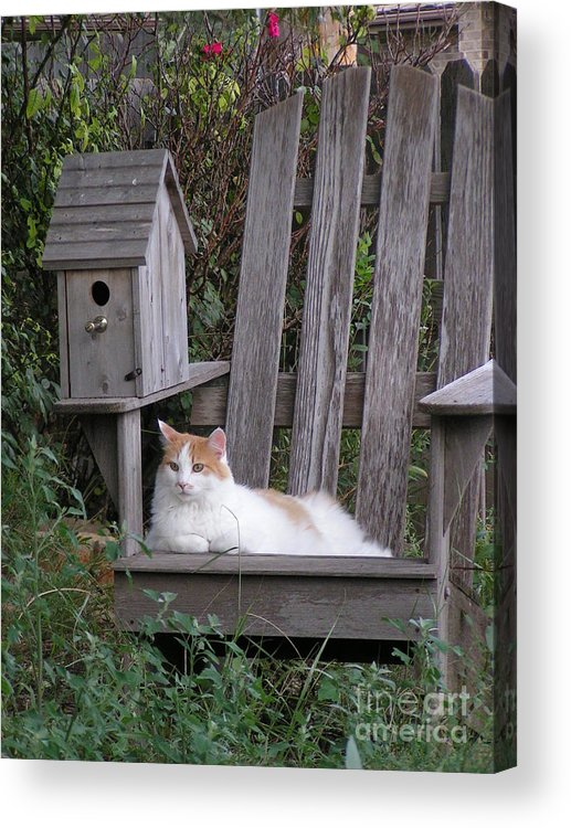Garden Acrylic Print featuring the photograph Garden Cat by Tracy L Teeter