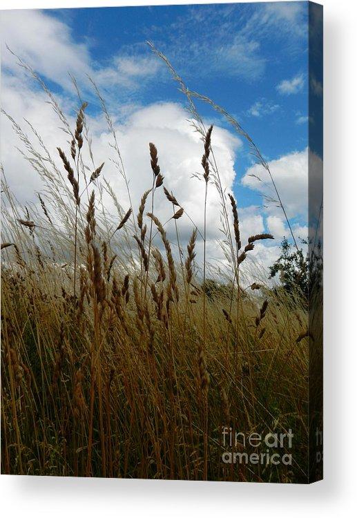 Nature Acrylic Print featuring the photograph Grassland by Loreta Mickiene