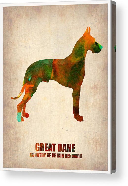 Great Dane Acrylic Print featuring the painting Great Dane Poster by Naxart Studio