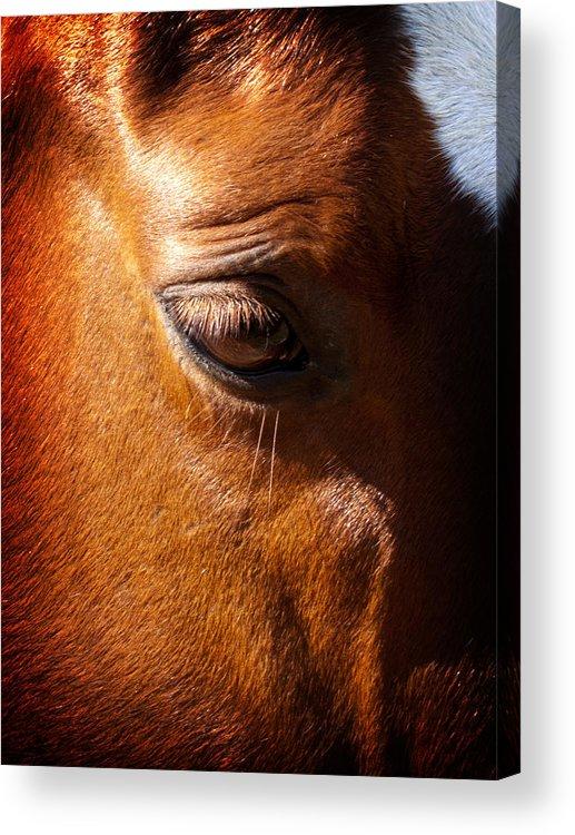 Horse Acrylic Print featuring the photograph Horse Profile by Joe Carini