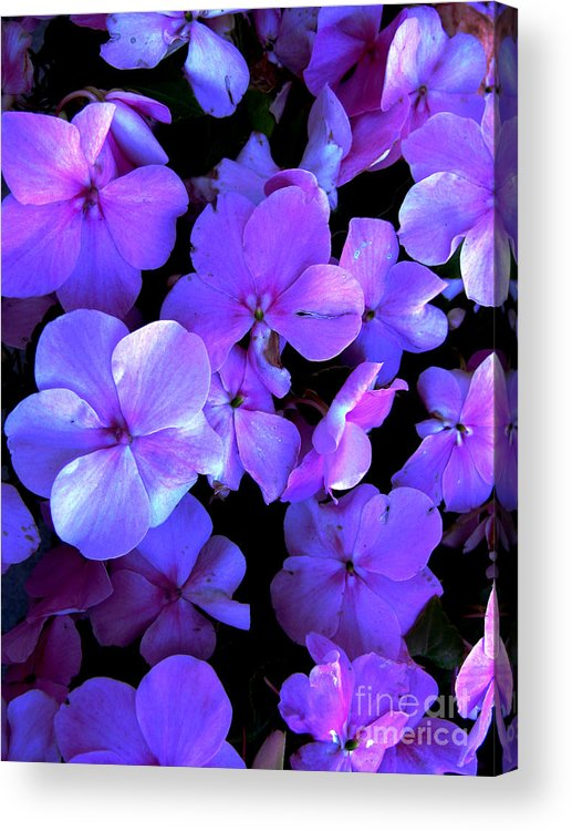 Flower Acrylic Print featuring the photograph Impatients by Nancie Johnson