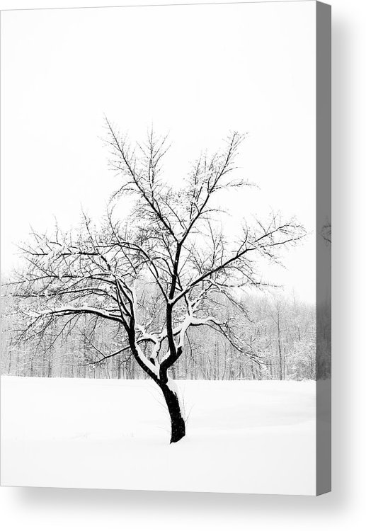 Trees Acrylic Print featuring the photograph Lone Tree by Andrew Ramdat