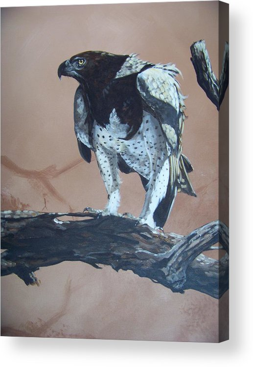 Martial Eagle Acrylic Print featuring the painting Martial Eagle by Robert Teeling