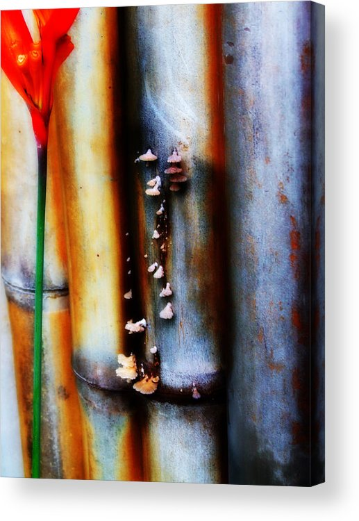 Bamboo Acrylic Print featuring the photograph Mushroom On Bamboo 2 by Lyle Barker