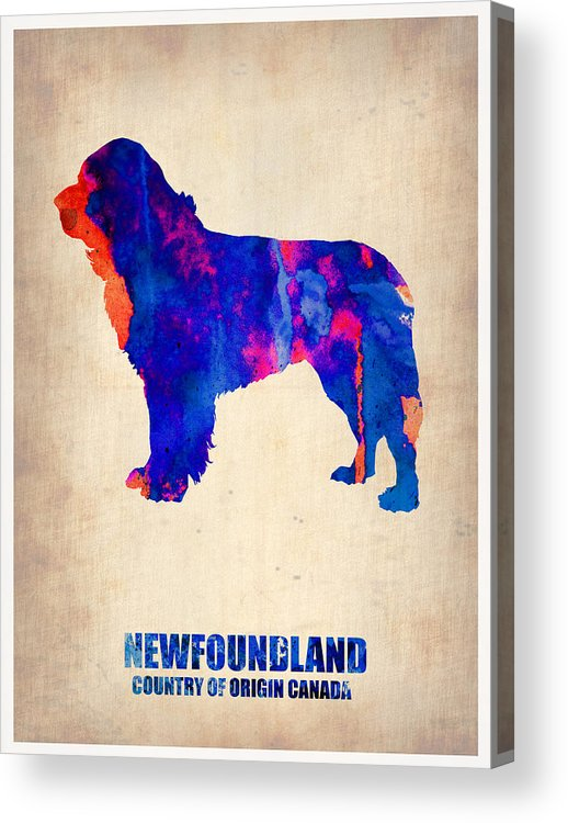Newfoundland Acrylic Print featuring the painting Newfoundland Poster by Naxart Studio