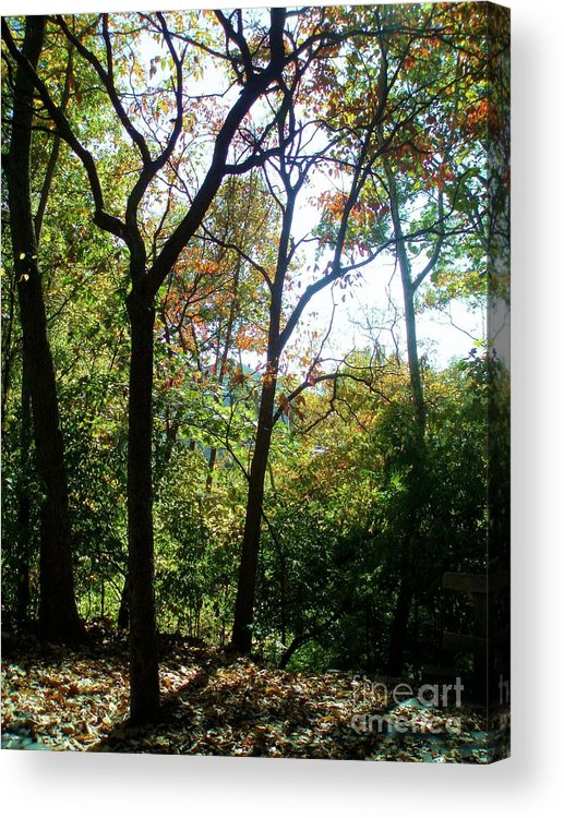 Tree Acrylic Print featuring the photograph On A Stroll by Tahlula Arts