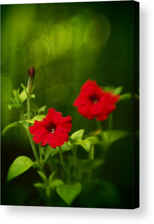Flowers Acrylic Print featuring the photograph Petunia Dreams In The Woods by Dorothy Lee