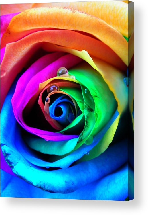 Rainbow Acrylic Print featuring the photograph Rainbow Rose by Juergen Weiss