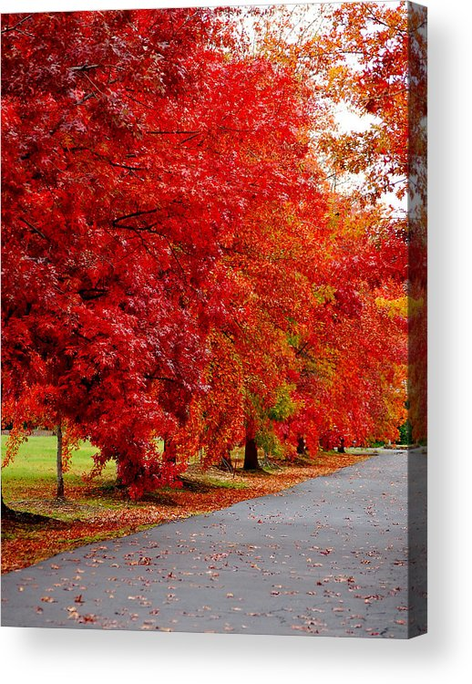 Red Leaf Leaves Fall Colors Road Wet Lined Chico Ca Tree Acrylic Print featuring the photograph Red Leaf Road by Holly Blunkall