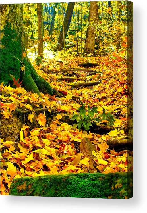 Fall Acrylic Print featuring the photograph Root Steps by Zafer Gurel