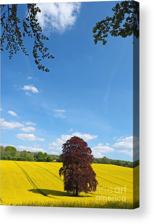 Landscape Acrylic Print featuring the photograph Rural Hampshire 2 by Alex Cassels