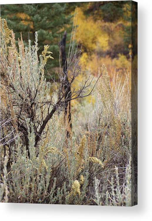 Landscape Acrylic Print featuring the photograph Sheep Creek Canyon Wyoming 11 by Rachel Butterfield